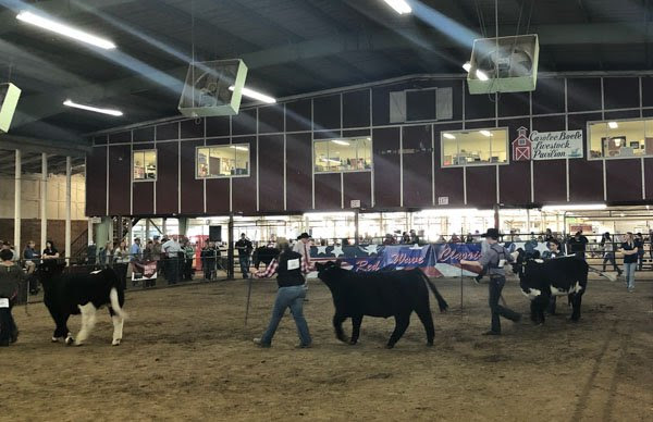 Red Wave Livestock Show