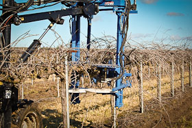 Vineyard Pros and Cons of Machine Pruning