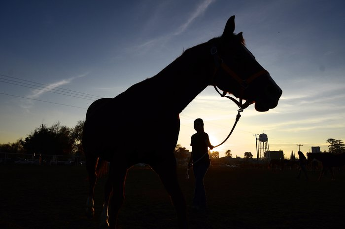 Student and horse at sunset.