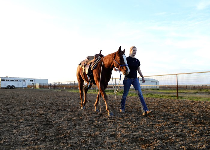 Student leading horse during lab.