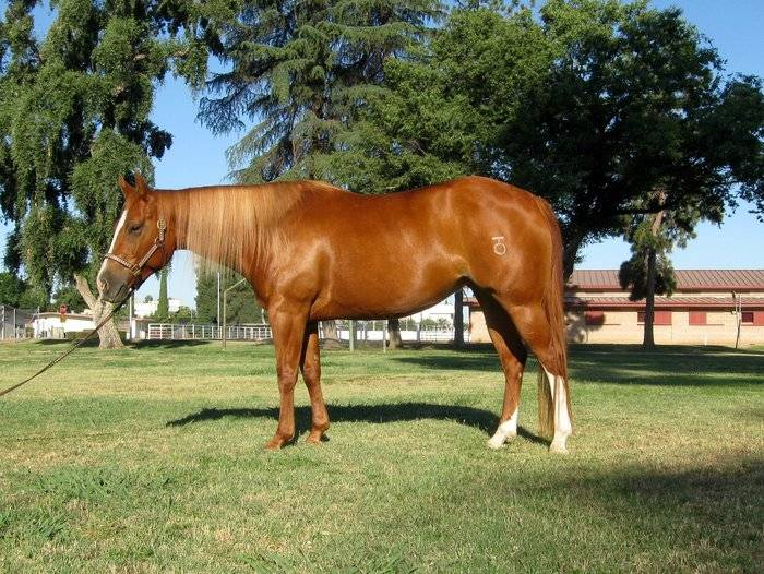 Broodmare Lizzy