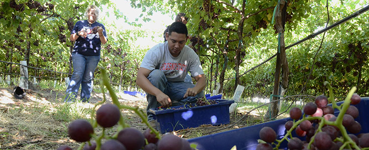 Viticulture & Enology program