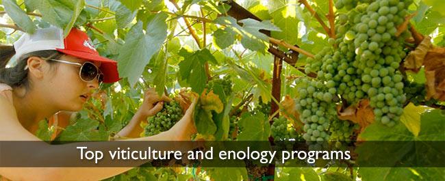 top viticulture and enology programs
