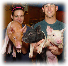 students working with piglets