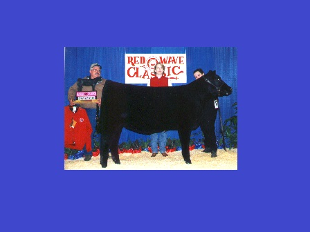 Grand Champion heifer 2000