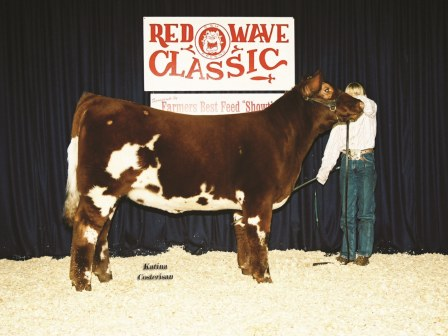 Reserve Grand Champion Futurity Heifer 2006
