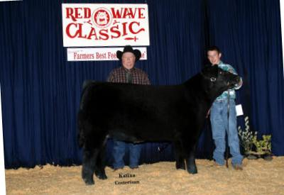 Reserve Champion Futurity Steer 2007