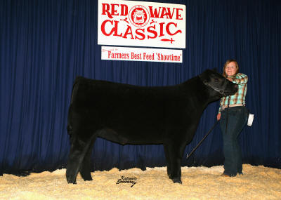 Grand Champion Futurity Steer 2008