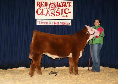 reserve Champion Futurity Steer 2008