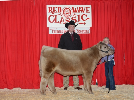 Reserve Champion Futurity Steer 2013