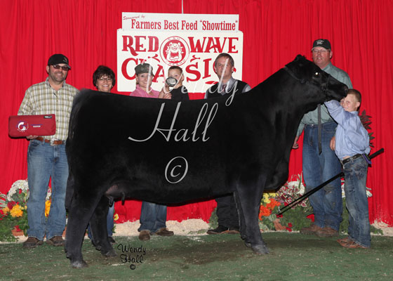 grand champion heifer 2014