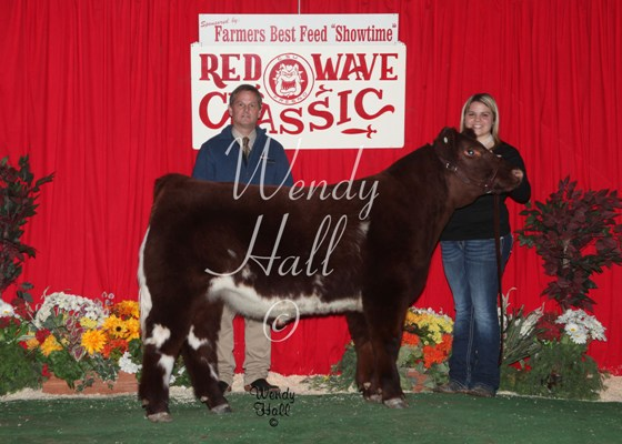 Grand Champion Futurity Steer 2014
