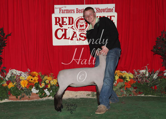 Reserve Grand Champion futurity Lambs 2014