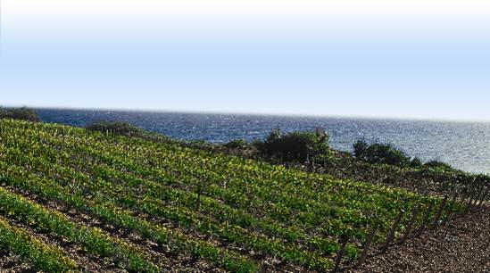 Italy vineyard by the sea