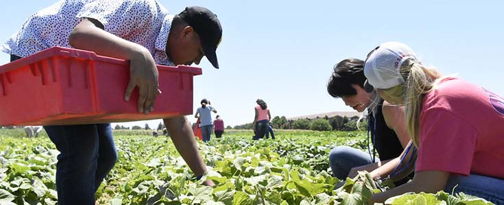 Fresno State USDA Ag Discovery Camp vegetable crop visit