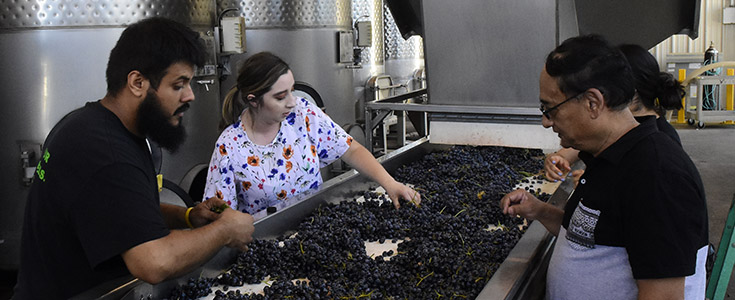 Grape Processing