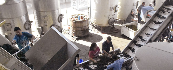 Winery Operations Picture