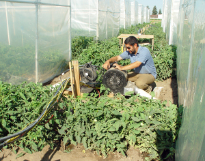 Plant science graduate student Bardia Dehghanmanshadi adjusts fans that control the amount of CO2 gas pumped into greenhouse chambers during experiments on Fresno State's University Farm Laboratory.